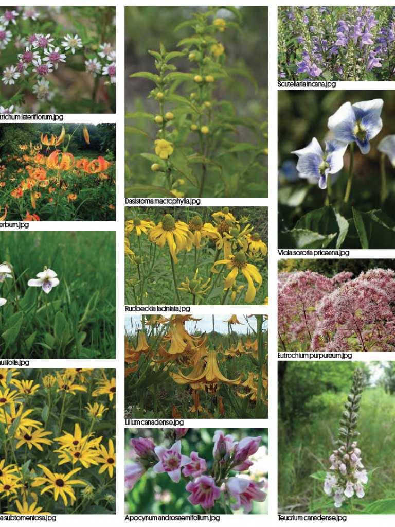 plants_design_cocnept_emmerik